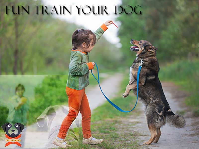 fun-train-dog
