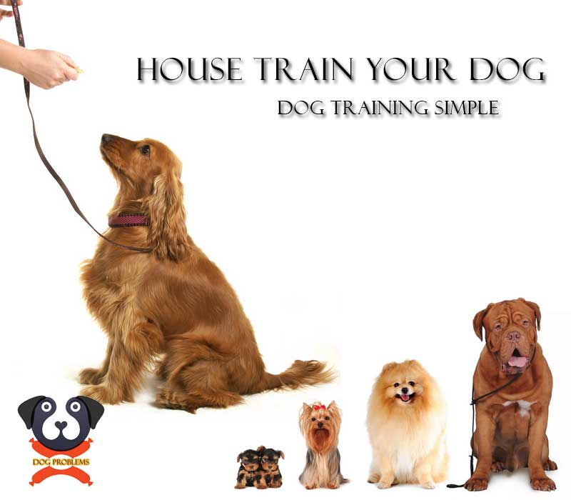 house-train-dog