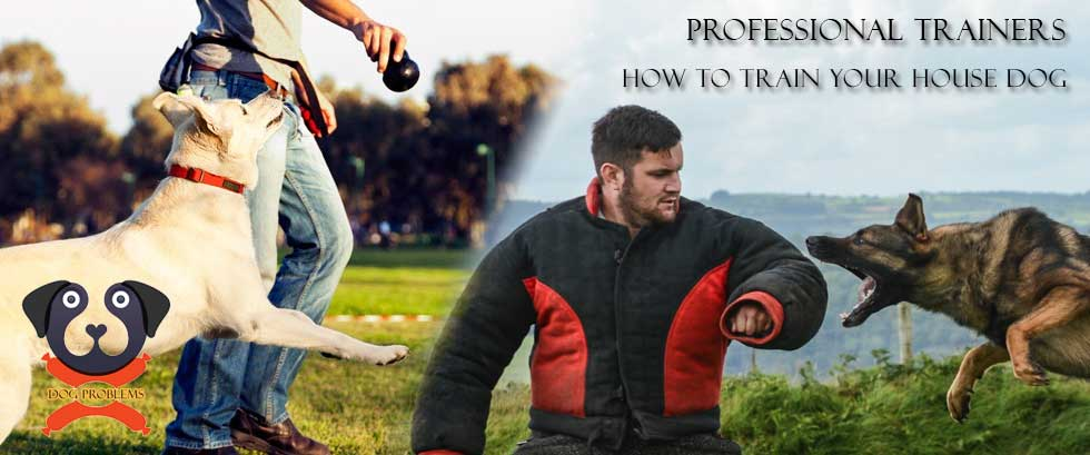 Secrets of Professional Dog Trainers: Top 10 Tips to Successfully Training your Dog yourself