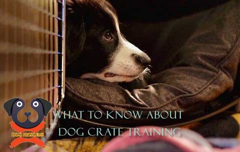 what-to-know-about-dog-crate-training