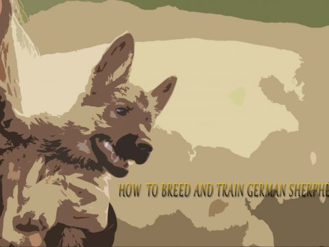 how to train german sherperd