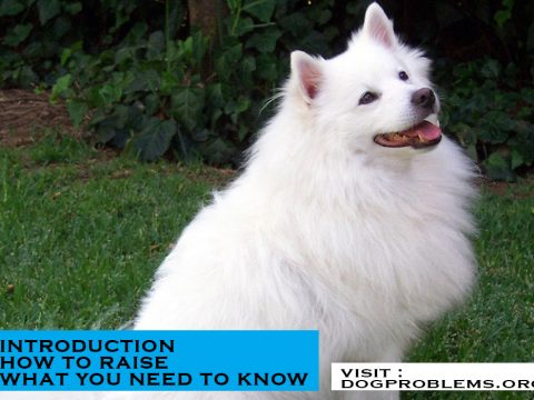 breed type american eskimo