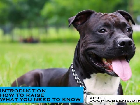 breed type american staffordshire terrier